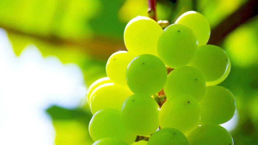 ワインが飲めない女子にもおすすめ。岩手県産ナイアガラ白ワインが甘くて美味しい!
